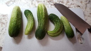 """Bread and butter"" cukes"